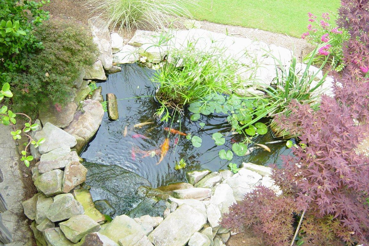 Koi pond for Fish pond ideas uk
